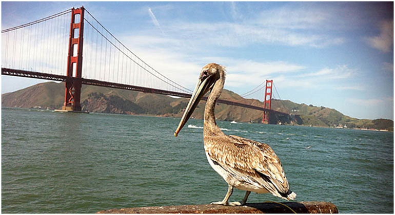 best private tours of San Francisco