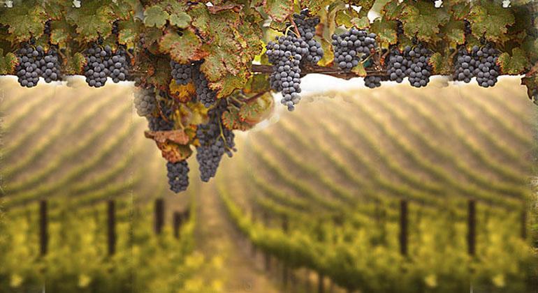private napa valley and sonoma wine tours